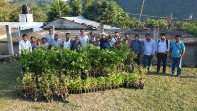 Photo of Alcalde de Xochiatipan realiza entrega de Plantas Frutales