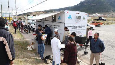 Photo of SSH inicia la Jornada Masiva de Esterilización Quirúrgica de perros y gatos en Tulancingo