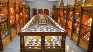 Photo of Museo de Mineralogía podría albergar oficinas de sociedades científicas