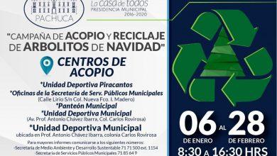 Photo of Abren centros de acopio y reciclaje de árboles de navidad en Pachuca