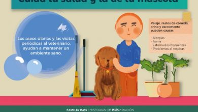Photo of Cuida a tus mascotas para prevenir enfermedades: IMSS