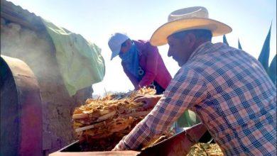 Photo of STPSH acerca a jornaleros agricolas  trabajos formales