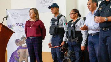 Photo of Pachuca cuenta ya con padrón municipal de Mascotas