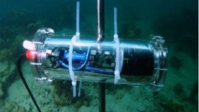 Photo of Desarrollan empresas proyecto con IA para salvar arrecifes de coral