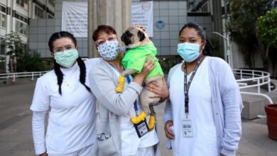 Photo of Reciben terapia canina trabajadores del CMN «20 de Noviembre»