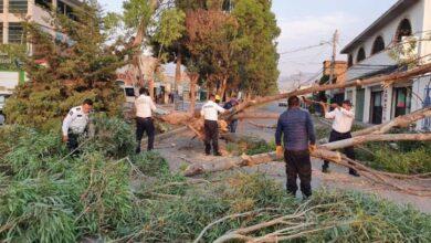 Photo of Atienden brigadas de emergencias municipales, caída de árbol en Mineral de la Reforma