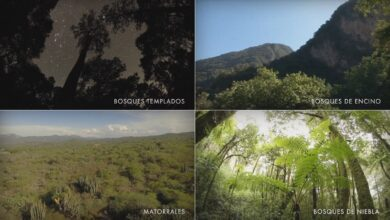 Photo of Hidalgo megadiverso, alberga la cuarta parte de la biodiversidad de México