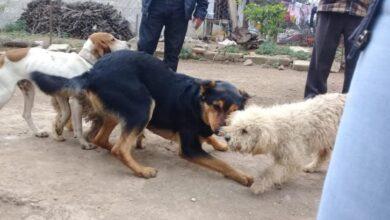 Photo of La Unidad de bienestar animal en Tulancingo atiende reportes de control canino