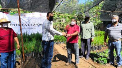 Photo of Comenzó plantación de árboles donados a Ejido Tulancingo