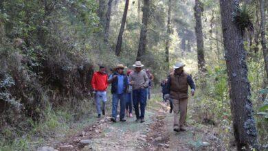 Photo of Alcalde Fernando Pérez entregará 3 mil 500 árboles al Ejido Tulancingo