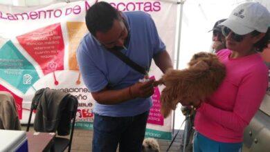 Photo of En Tulancingo han atendido más de 200 reportes sobre jaurías, agresiones caninas y maltrato animal