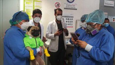 Photo of Inicia ISSSTE jornadas de apoyo psicológico a personal médico con el perrito Harley