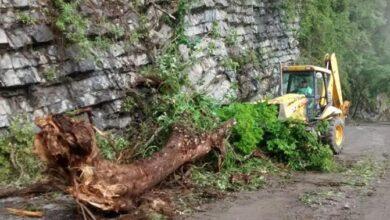 Photo of Sopot retira árbol caído en la carretera Santa María Temascalapa-Huehuetla