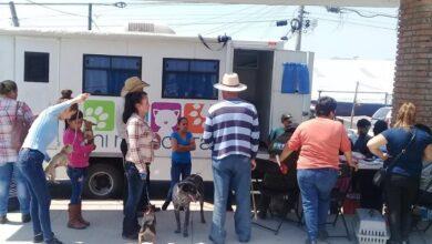 Photo of Tulancingo aplica políticas públicas efectivas para la protección y bienestar animal