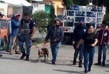 Photo of Detienen a presuntos ladrones en Parque de Poblamiento