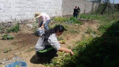 """Photo of Exitoso desarrollo del Programa Municipal """"Huertos familiares"""" en Tulancingo"""