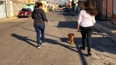 Photo of Indispensable la atención de servicios básicos en Mineral de la Reforma: Enna Karell