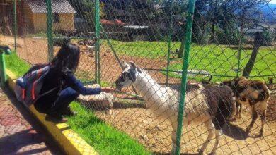 Photo of Zoológico de Tulancingo reanuda actividades
