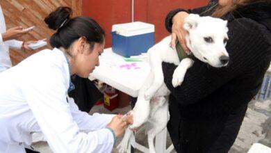 Photo of De septiembre a diciembre se realizará en Hidalgo vacunación antirrábica de perros y gatos