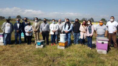 Photo of En Tulancingo se puso en funcionamiento primer apiario municipal de resguardo